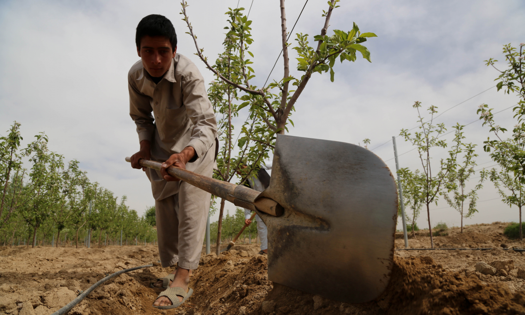 Burjak Village, Shakardara district, Kabul, Afghanistan,Abdul Waseh's son leveling out the tree-side raised beds. Photo by World Bank Creative Commons